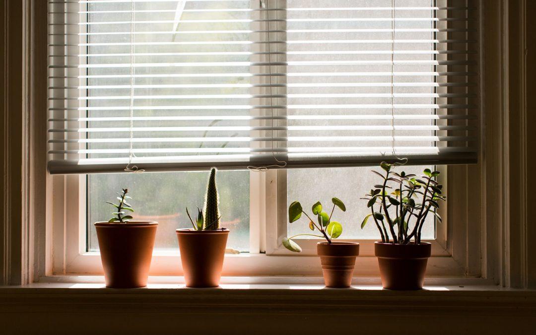 Qué hacer con tu terraza y plantas de interior en Noviembre