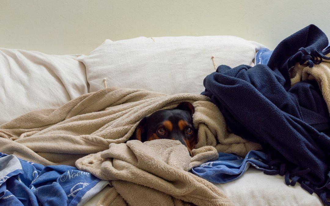 El frío ha llegado ¿Tiras de mantita o prendes la calefacción?